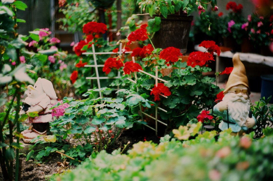 Grandma's garden, velvia 50