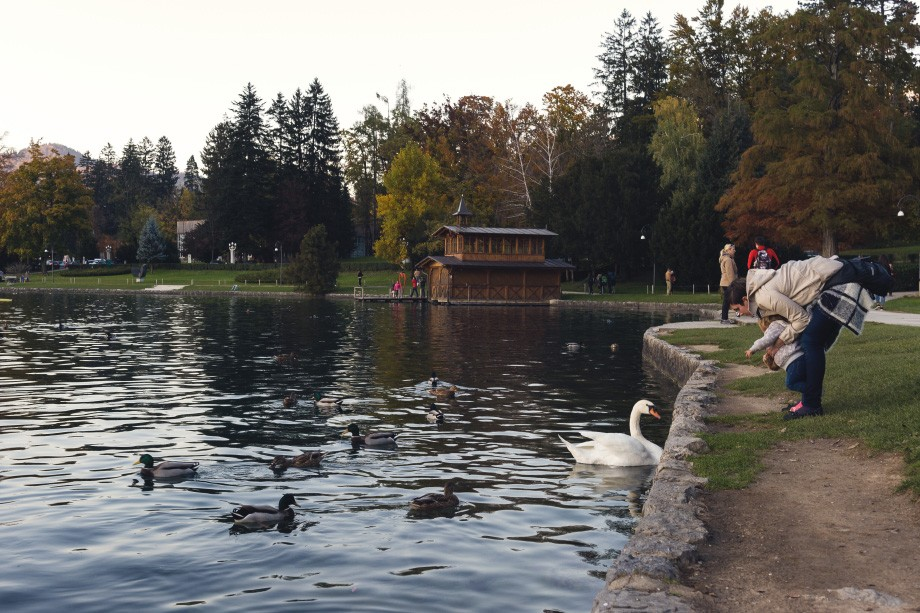 Lake Bled swans ducks